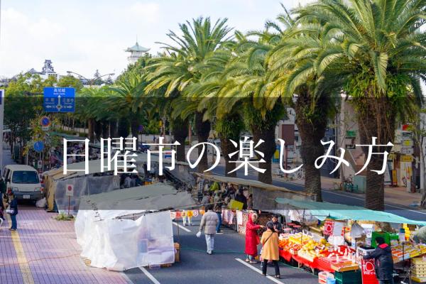 日曜市ってどうやって楽しむの?高知の伝統文化「日曜市」のド定番スポットから近隣駐車場までまるごと紹介!