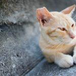 【失敗談】真夏に猫島として有名な「男木島」に行って、猫に会えなかった話