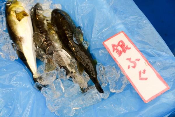okushimanto-143
