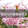 【桜の名所】今年はどこ行く?高知県内のお花見スポット27ケ所をまとめて紹介!